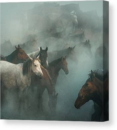 Kapadokya Canvas Prints