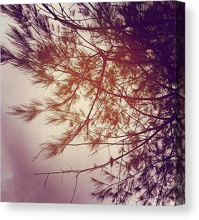 Weeping Willows Canvas Prints
