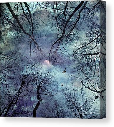 Cloud Forests Canvas Prints
