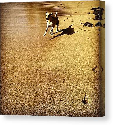Yellow Lab Canvas Prints