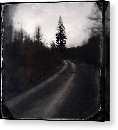 Forest Paths Canvas Prints