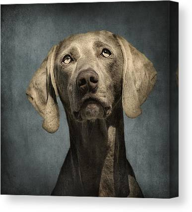 Weimaraner Canvas Prints