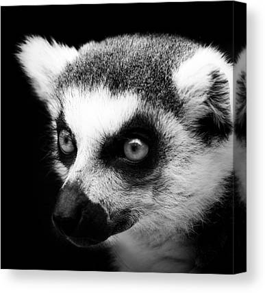 Lemur Canvas Prints