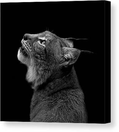 Lynx Canvas Prints