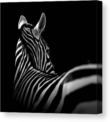 Zoo Animals Canvas Prints