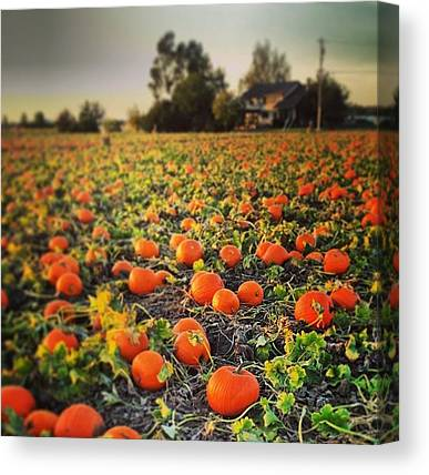 Pumpkin Patch Canvas Prints