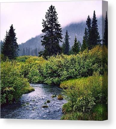 Trout Canvas Prints