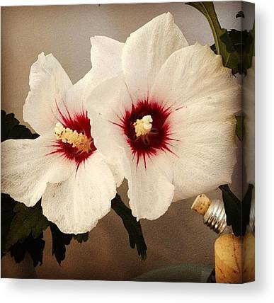 Roses Canvas Prints