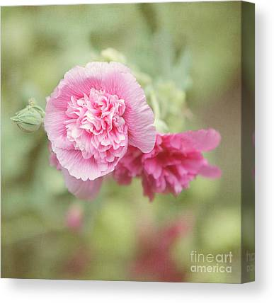 Pink Althea Canvas Prints