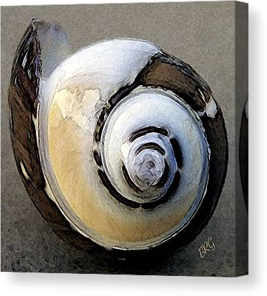 Round Shell Canvas Prints