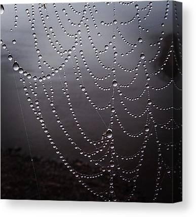 Spider Web Canvas Prints