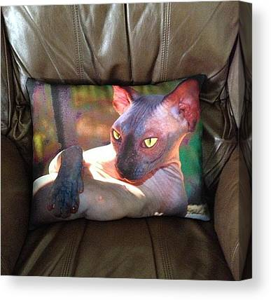 Sphynx Cats Canvas Prints