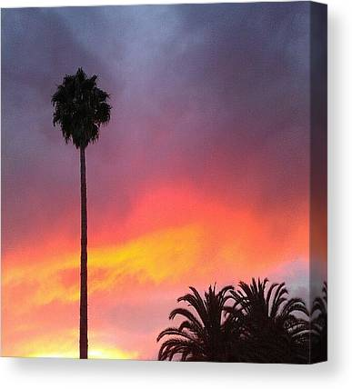 Palm Trees Sunsets Canvas Prints