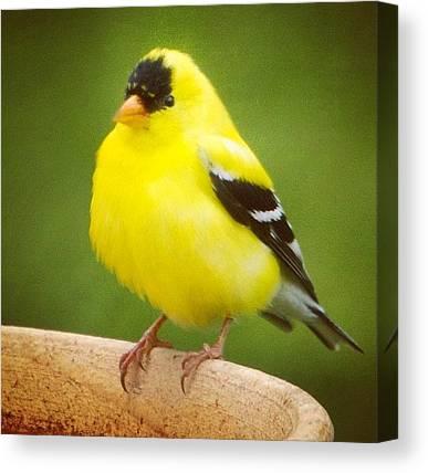 Ornithology Canvas Prints