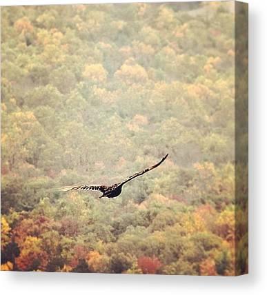 Appalachian Mountains Canvas Prints
