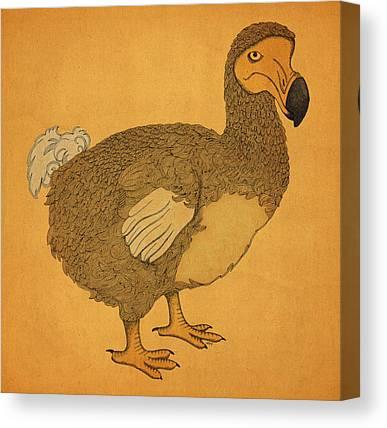 Dodo Canvas Prints
