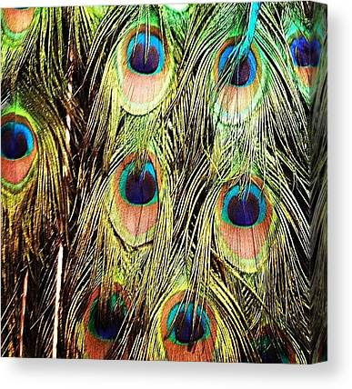 Peacocks Canvas Prints