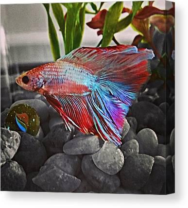 Tropical Fish Canvas Prints