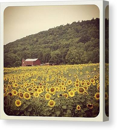 Farmers Canvas Prints