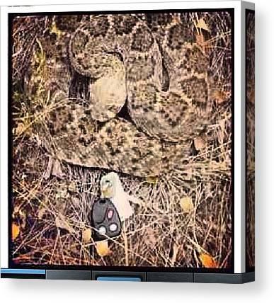 Rattlesnakes Canvas Prints