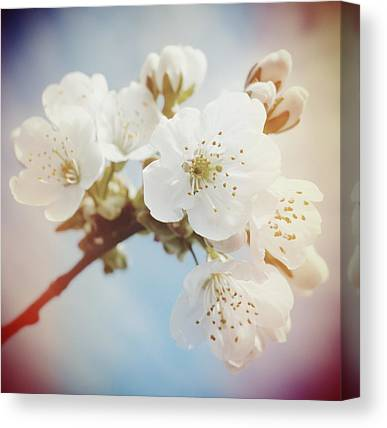 Apple Canvas Prints
