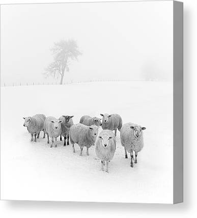 Trees In Winter Canvas Prints