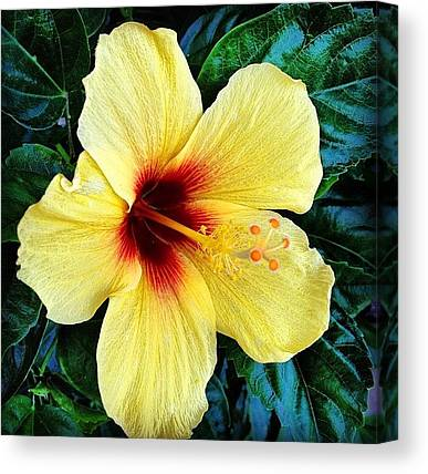 Hawaii Canvas Prints