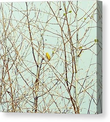 Warblers Canvas Prints