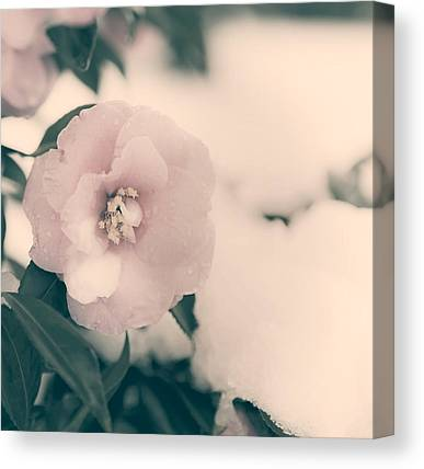 Theaceae Canvas Prints