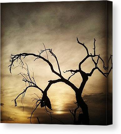 Sonoran Desert Canvas Prints