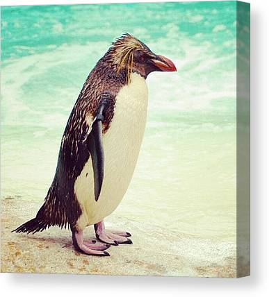 Antarctica Canvas Prints