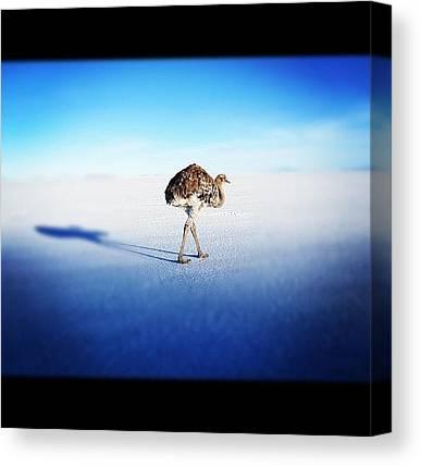 Ostriches Canvas Prints