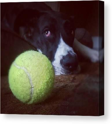 Tennis Ball Canvas Prints