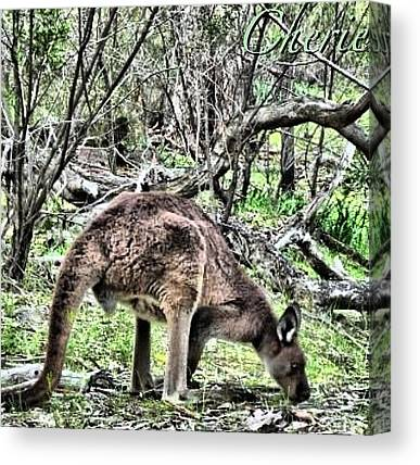 Kangaroo Canvas Prints