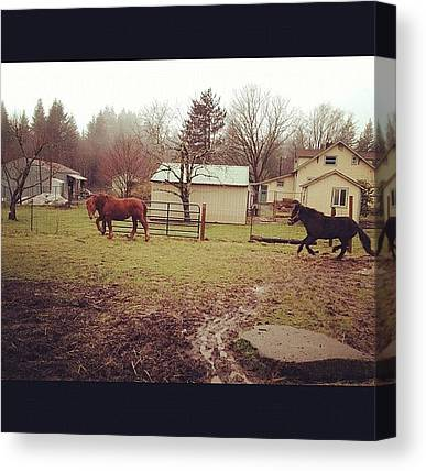 Horse Farms Canvas Prints