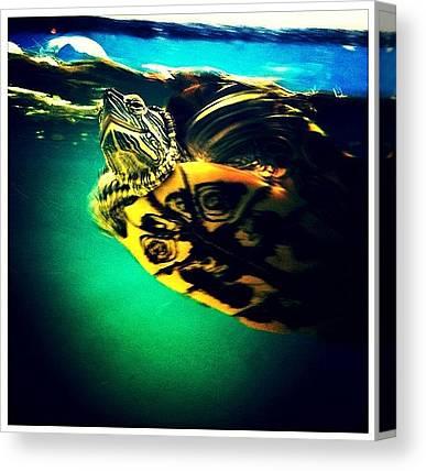 Turtles Canvas Prints