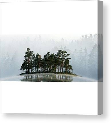Foggy Forests Canvas Prints