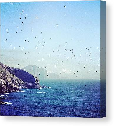 Puffins Canvas Prints