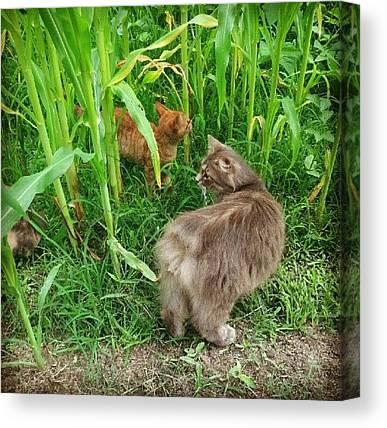 Manx Cats Canvas Prints