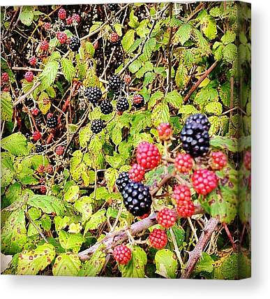 Wild Berries Canvas Prints