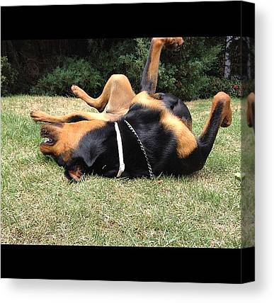 Rottweilers Canvas Prints