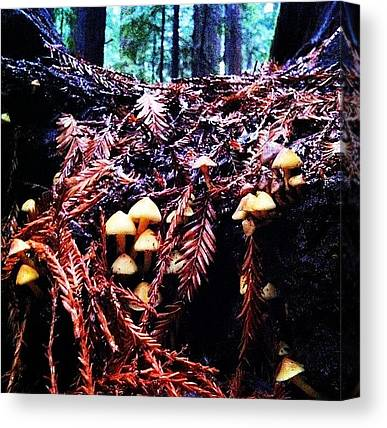 Redwood Forest Canvas Prints