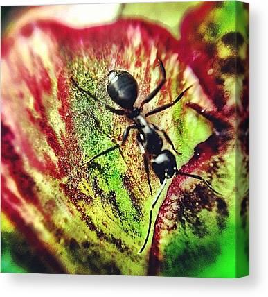 Ants Canvas Prints