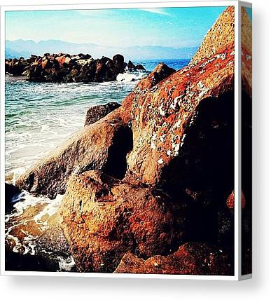 Seashells Canvas Prints