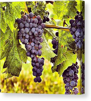 Grapefruits Canvas Prints