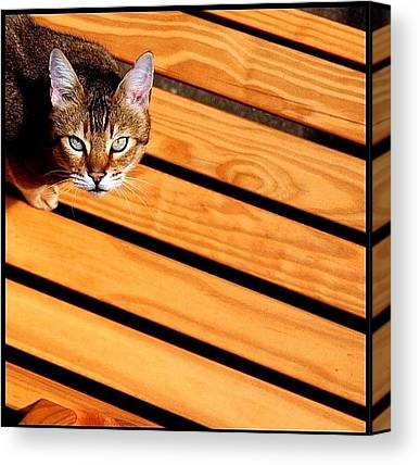 Tigers Canvas Prints