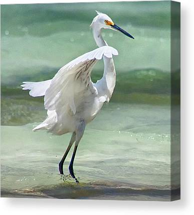 Birds Canvas Prints