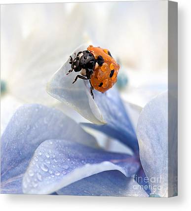 Insect Canvas Prints