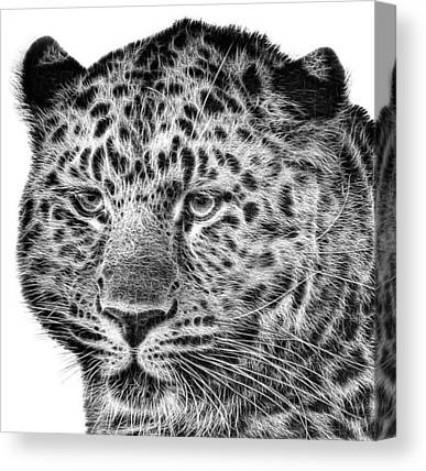 Wildlife Canvas Prints