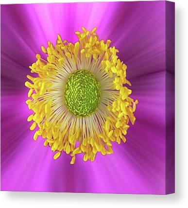 Petals Canvas Prints
